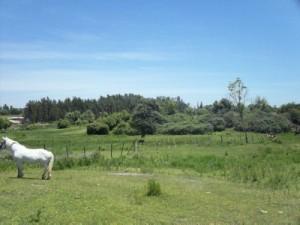 horse_chile-farmland