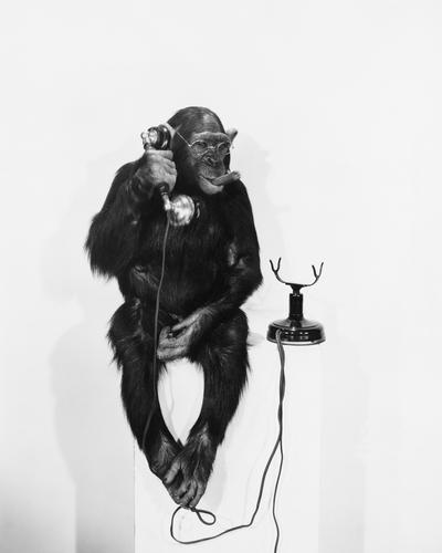 Monkey on the phone