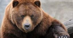 bear-position-of-strength